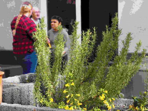 Aufnahme einer grünen Pflanze und Menschen im Hintergrund.
