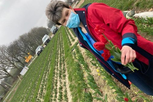 Ein Frau in roter Jacke auf einem Tulpenfeld, die zwei rote Tulpen gepflückt hat.